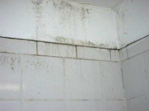 schimmel verwijderen hoe verwijder je schimmels in huis